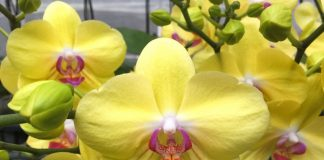 «Почкорост» — уникальный регулятор роста для комнатных растений