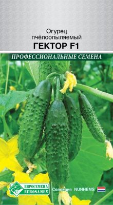 «Профессиональные семена» от ТМ «Евросемена» доступны простым дачникам