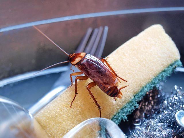 Тараканы — как избавиться от непрошеных гостей?