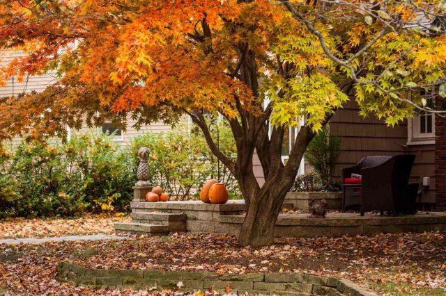 Принимая решение, убирать опавшую листву или нет, стоит учитывать и такой фактор, как стиль сада