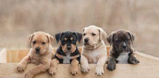 О чём стоит подумать, прежде чем завести щенка?