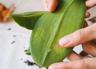Боремся с белым налетом на орхидее (мучнистый червец)