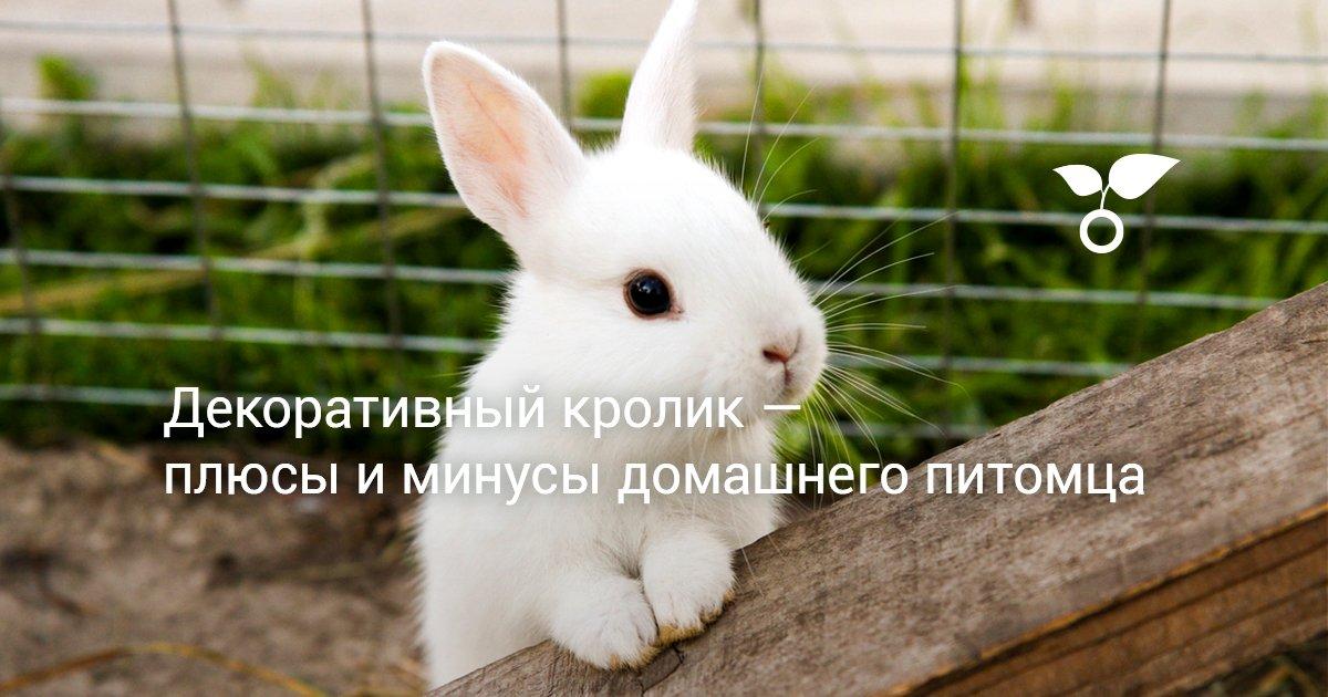 Какого кролика лучше завести в квартире