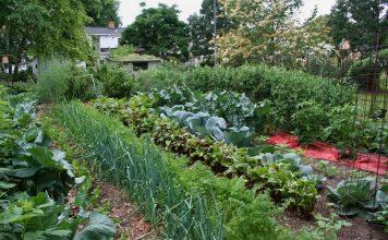 Эффективно и экологично — микробиологические удобрения