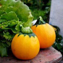 Кабачок «Апельсинка»