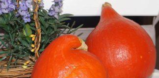 Потимарон, или тыквокаштан — чудо-овощ из Франции или обычная тыква?