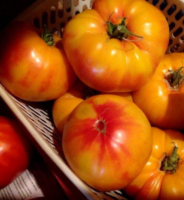 Томат «Грейпфрут»