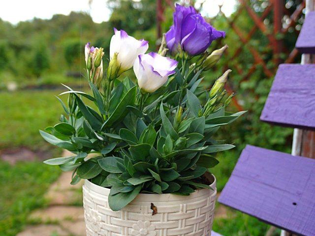 7 однолетних цветов, которые я советую посадить в феврале