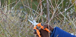 Что не забыть сделать в феврале садоводу?