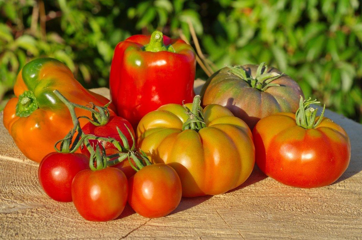 Купить семена томата Земляк (Аэлита) | 795x1200