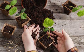 Секреты выращивания здоровой рассады