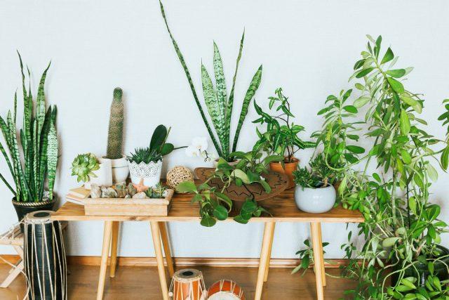 Какие комнатные растения подойдут для аллергиков?