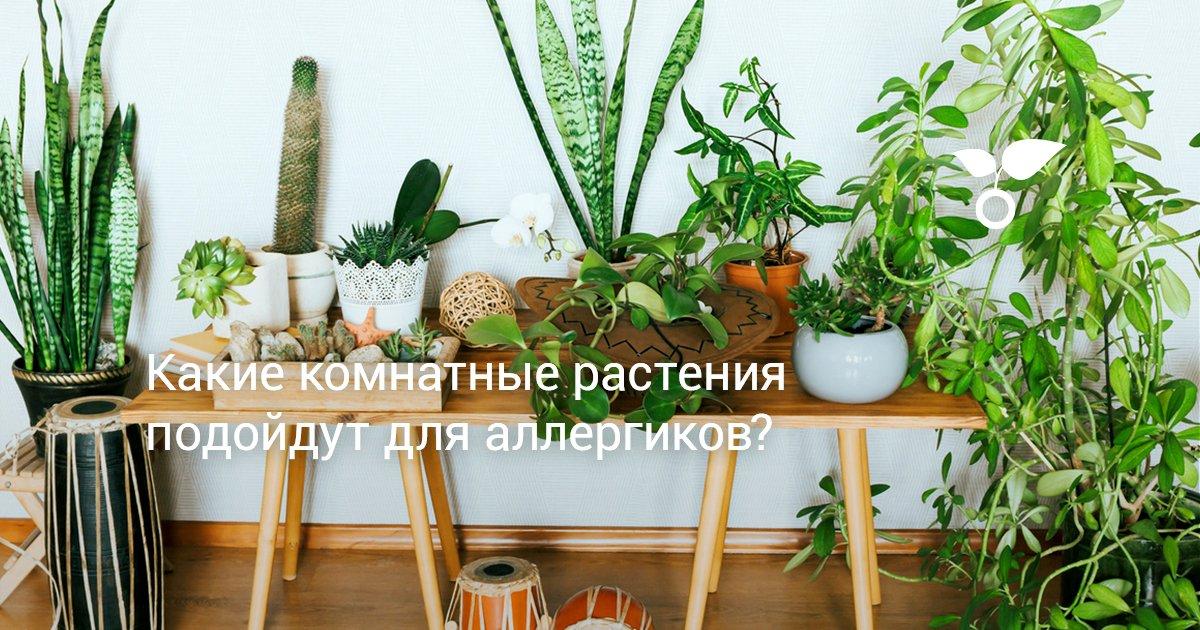 Какие растения опасны для аллергиков, а какие