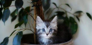 6 главных вещей, которые должны знать хозяева маленького котенка