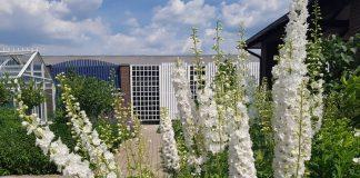 Многолетние цветочные культуры – это постоянство из года в год в Вашем саду!