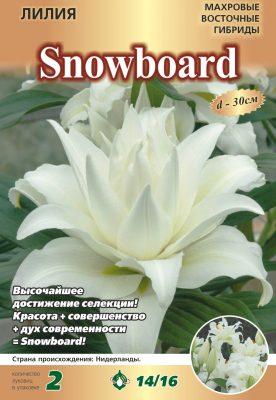 10 лучших восточных гибридов лилии от компании «Евросемена» г. Барнаул