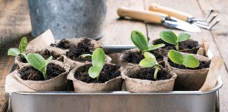 Пора выращивать рассаду