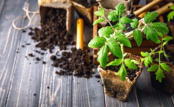 Выращивание рассады различных культур имеет свои тонкости и нюансы