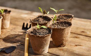 Почему болеет рассада, и какие биопрепараты помогут сделать почву идеальной для выращивания здоровых растений