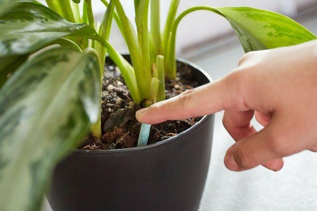 Единственное, о чем стоит позаботиться при использовании удобрения длительного действия весной — умеренное увлажнение и крайне аккуратные поливы до возобновления роста