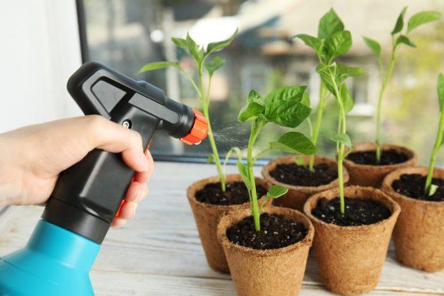Вирусные заболевания рассады и взрослых растений