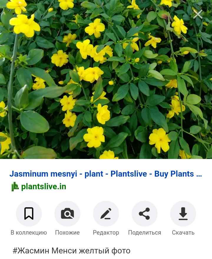 Screenshot_2020-03-28-22-54-25-906_com.android.chrome
