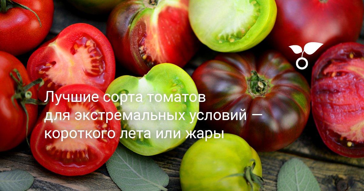 Купить семена Томат Флажок почтой цена 10 руб. -semena8.ru | 630x1200