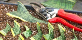 Особенности черенкования комнатных растений