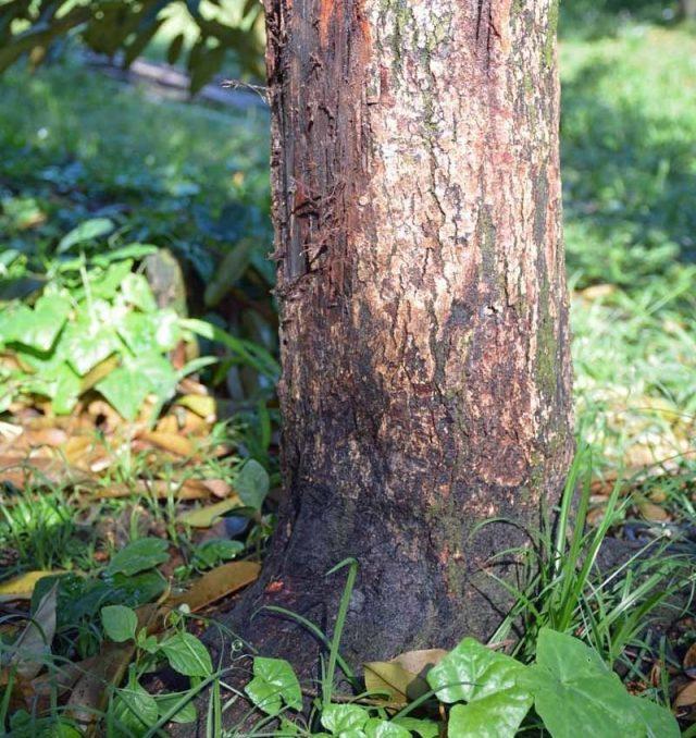 Грибок разрушает древесину