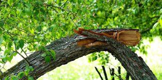 Почему деревья падают?
