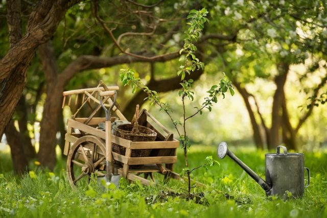 10 причин, почему деревья не дают приросты