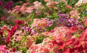 6 однолетних цветов, которые нужно посеять в апреле