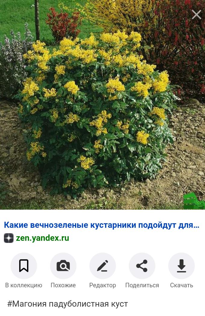 Screenshot_2020-04-15-18-27-29-177_com.android.chrome