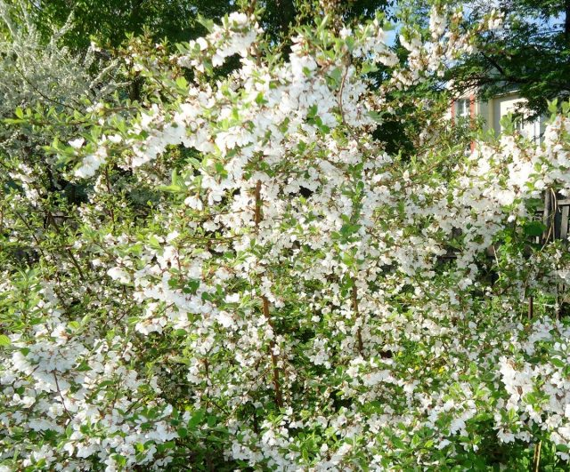К моменту цветения деревья должны быть готовы
