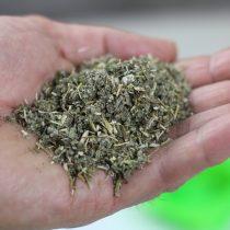 Покупаем в аптеке высушенные травы