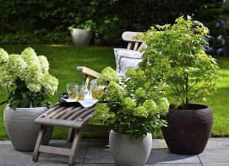 Модные новинки компактных многолетних растений