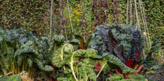 Экзотические овощи и травы, которые растут почти сами по себе