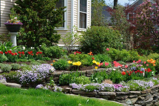 Яркий весенний палисадник из цветущих многолетников — создание и уход