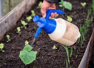 Полив растений растворам удобрений