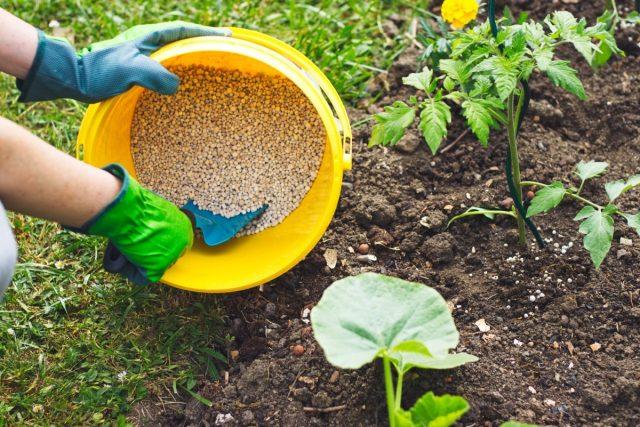 Удобрение для подкормки овощных культур