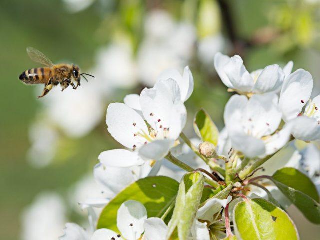 Маленькие труженики большого урожая — о роли опылителей в жизни растений