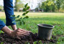 Преимущества использования микоризных грибов при посадке растений