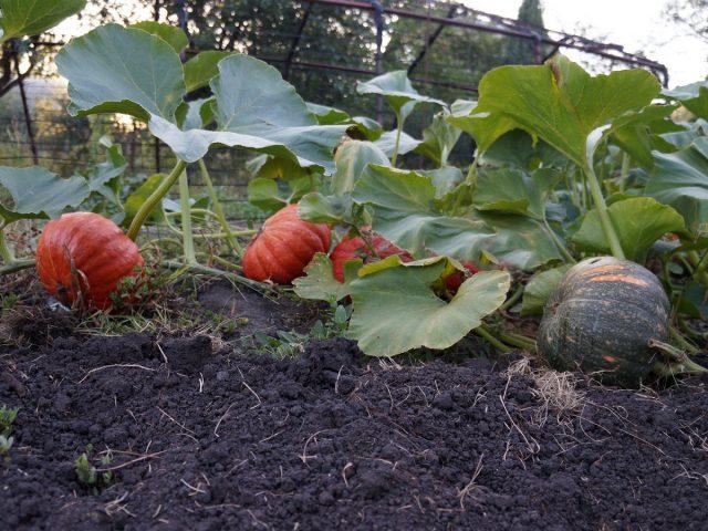 В гостях на даче, или Как создать гармоничный сад на шести сотках?