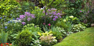Ухоженный цветник – радость для глаз