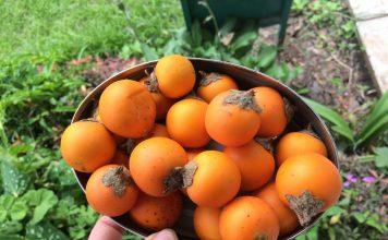 Экзотическая наранхилла — декоративный кустарник с вкуснейшими ягодами