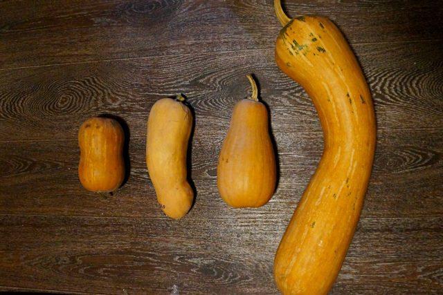 Форма и размеры тыквы баттернат могут варьироваться, но ее никогда не перепутаешь с другими типами тыквы