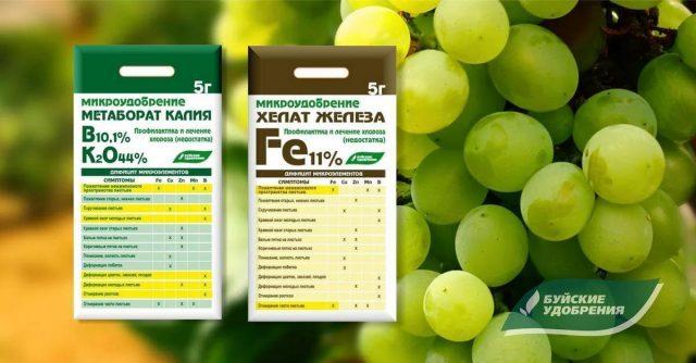 Схема подкормок винограда от саженца до урожая