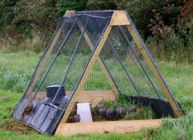 Интересны вольеры для куропаток, сделанные в форме пирамиды