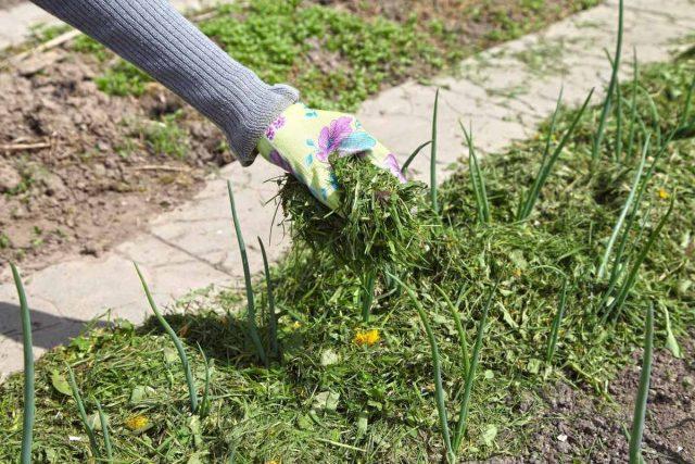 Скошенная трава и сорняки— прекрасная мульча