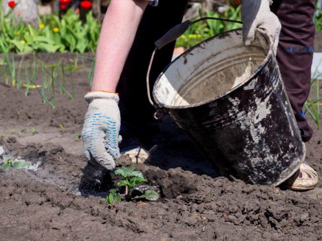 Зола в саду и огороде — какая бывает, где взять и как использовать?